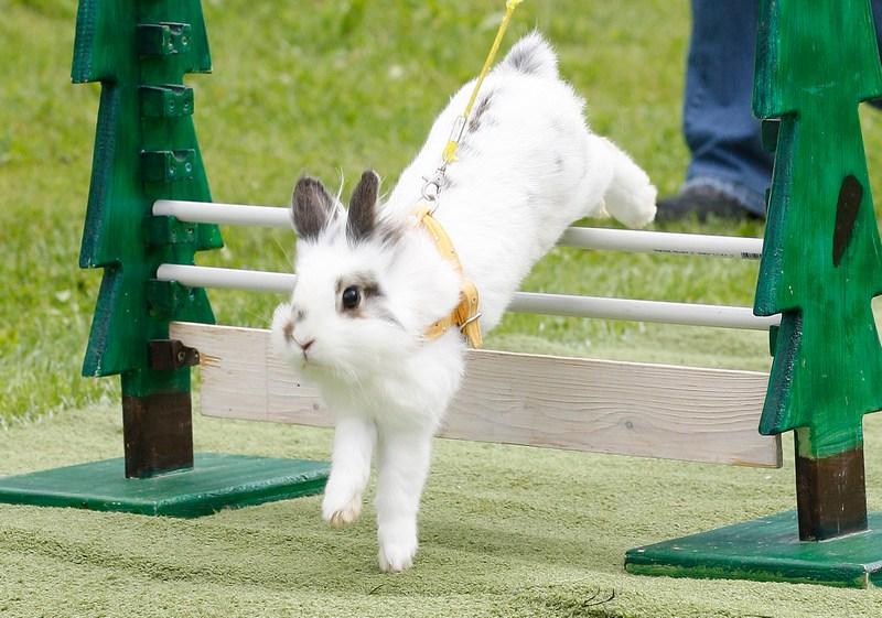 Пятый открытый чемпионат по прыжкам среди кроликов, Роммерц, Германия. Фото: Ralph Orlowski/Getty Images