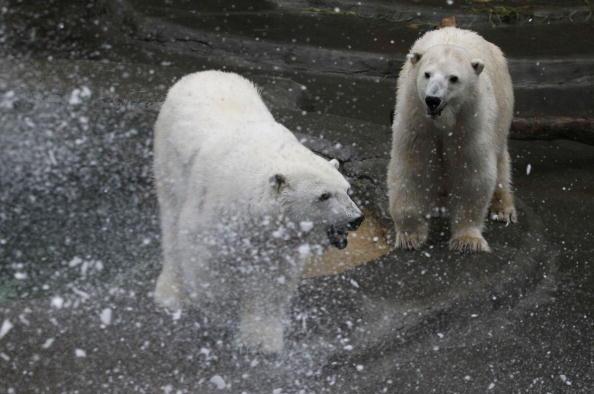 Зоопарк Сан-Франциско, Калифорния. Фото: Justin Sullivan/Getty Image