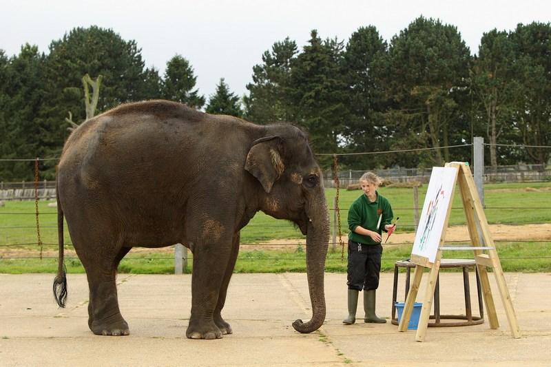 Сотрудник зоопарка Элизабет Каллагхан ассистирует Каришме. Фото: Oli Scarff/Getty Images