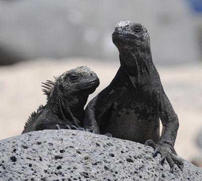 Фото: RODRIGO BUENDIA/AFP/Getty Images