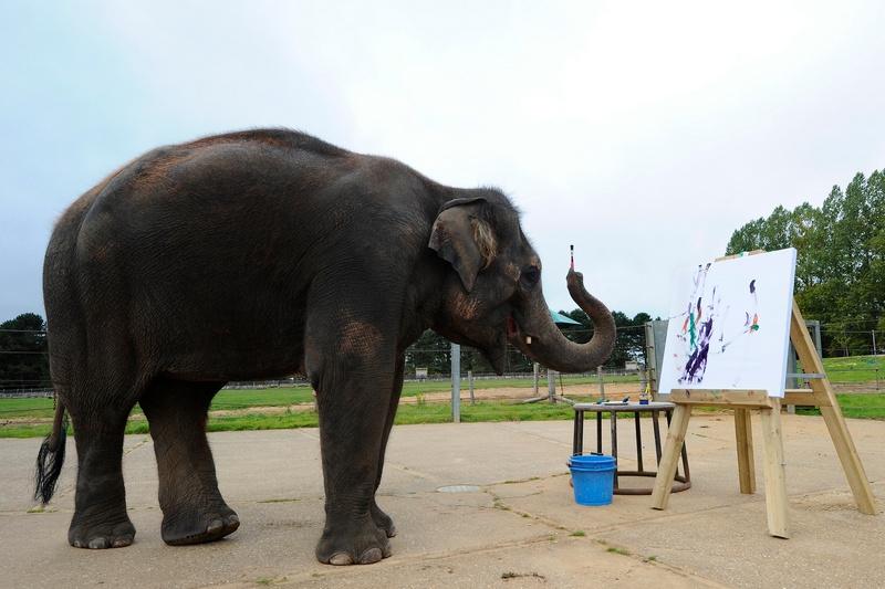 Азиатская слониха Каришма рисует. Фото: CARL COURT/AFP/Getty Images