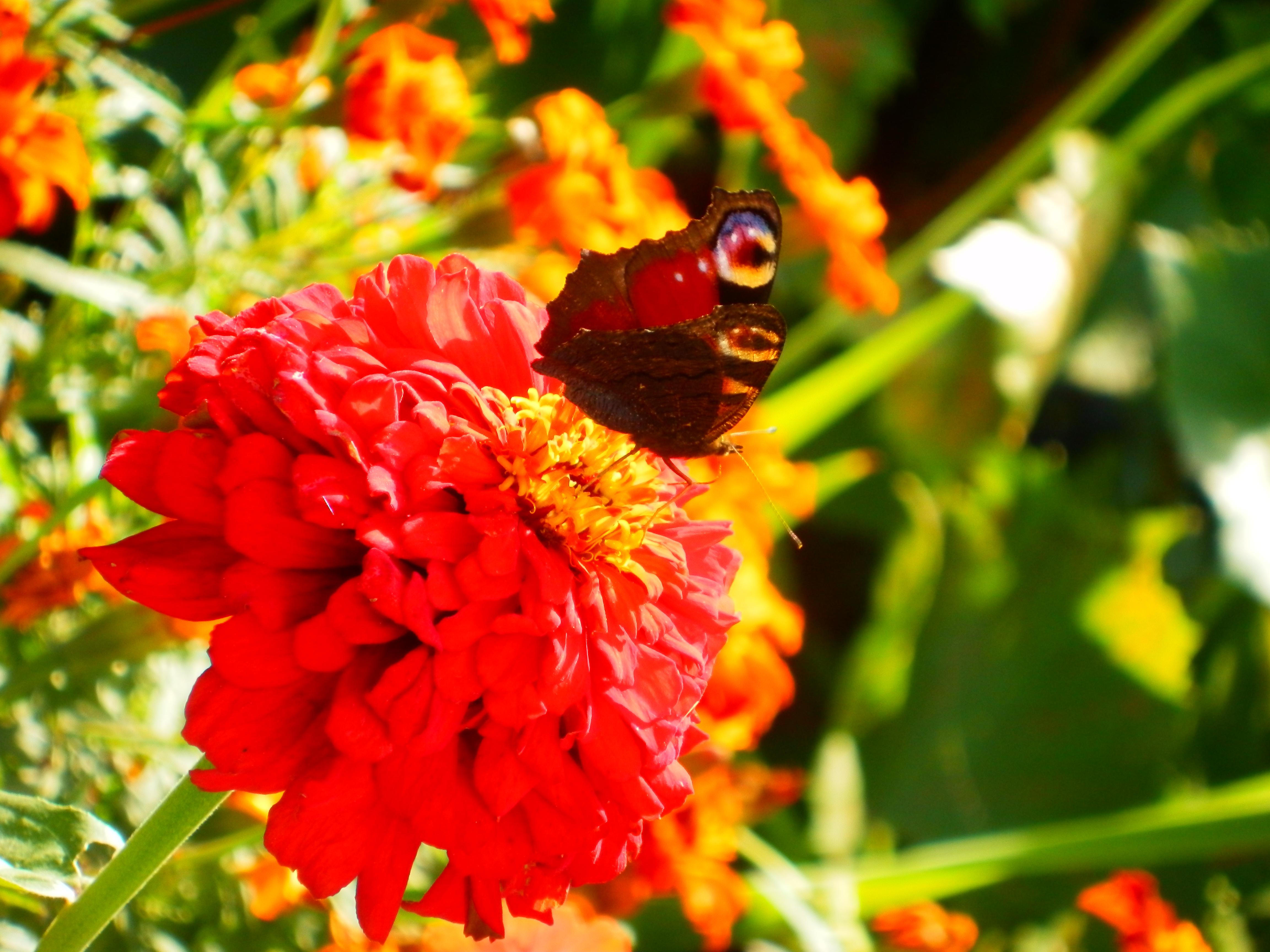 Мені ж достатньо що? – привітно усміхнена була щоб Kвітка!