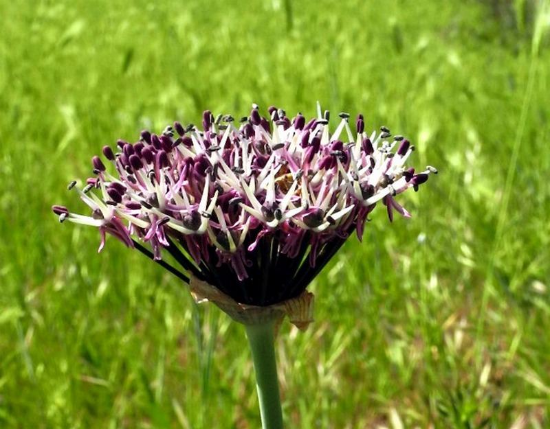 У парку Учкуївка, квіти. Фото: Алла Лавриненко / EpochTimes.com.ua