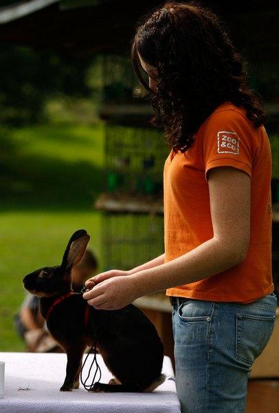 Ульрика Клаг с кроликом Сэмми. Ульрика участвует в соревнованиях на протяжение последних 10 лет. Фото: Ralph Orlowski/Getty Images
