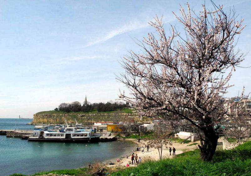 Севастопольські сади цвітуть. Фото: Алла Лавриненко/Велика Епоха
