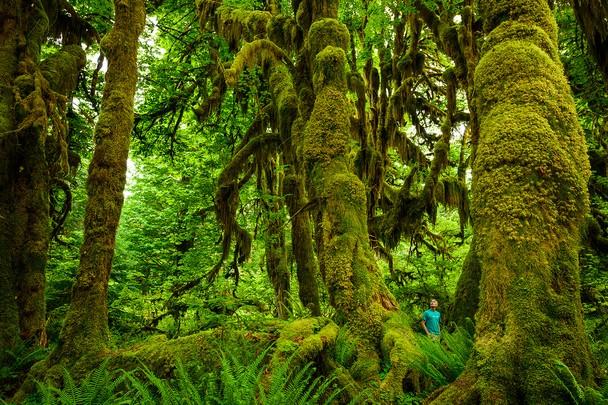 Прогулянка в дощовому лісі. Національний парк Олімпік, США. Фото: Scott Sady/travel.nationalgeographic.com