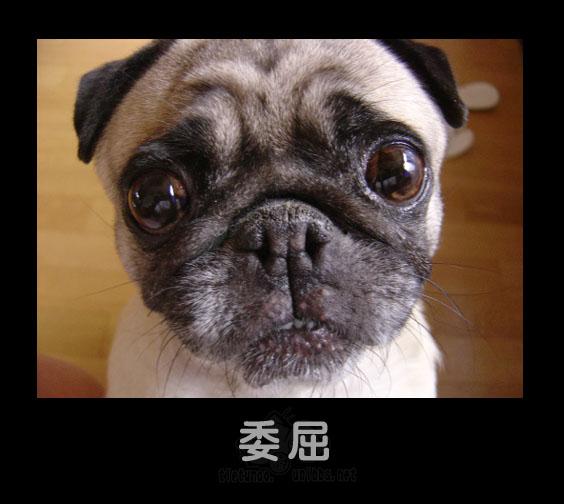 Обида. Фото с secretchina.com