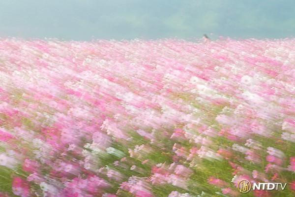 Осенний день в Южной Корее. Фото: Gwan Hae Seong/NTDTV