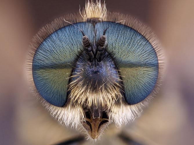 Голова львинки. Фото: Laurie Knight/Maidstone, Kent, UK