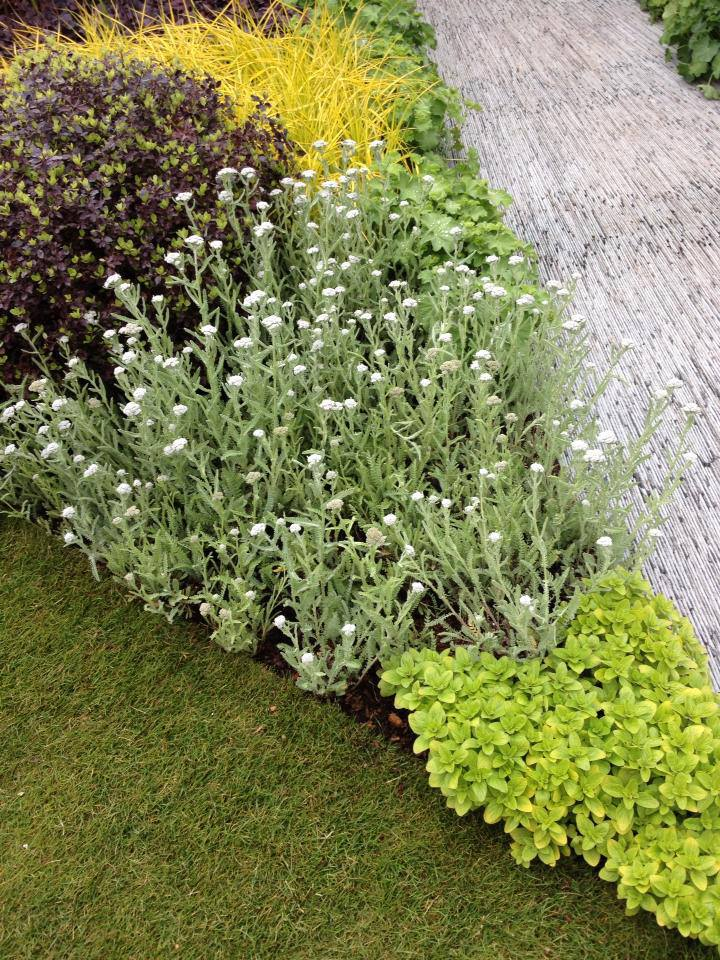 Великолепное сочетание растений в саду «Возможность видеть», по форме напоминающем глаз. Фото: rhschelsea/facebook.com