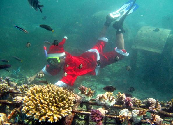 Индонезийский дайвер, одетый в костюм Санта Клауса, рассматривает искусственный коралловый риф в Нуса Пенида на острове Бали. Фото: SONNY TUMBELAKA/AFP/Getty Image