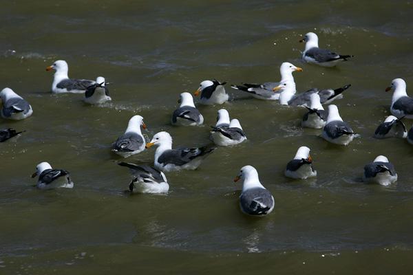 Повинно пройти кілька десятків років, щоб колишнє озеро Оуенс знову стало придатним для життя і відновило свою екосистему. Фото: David McNew/Getty Images