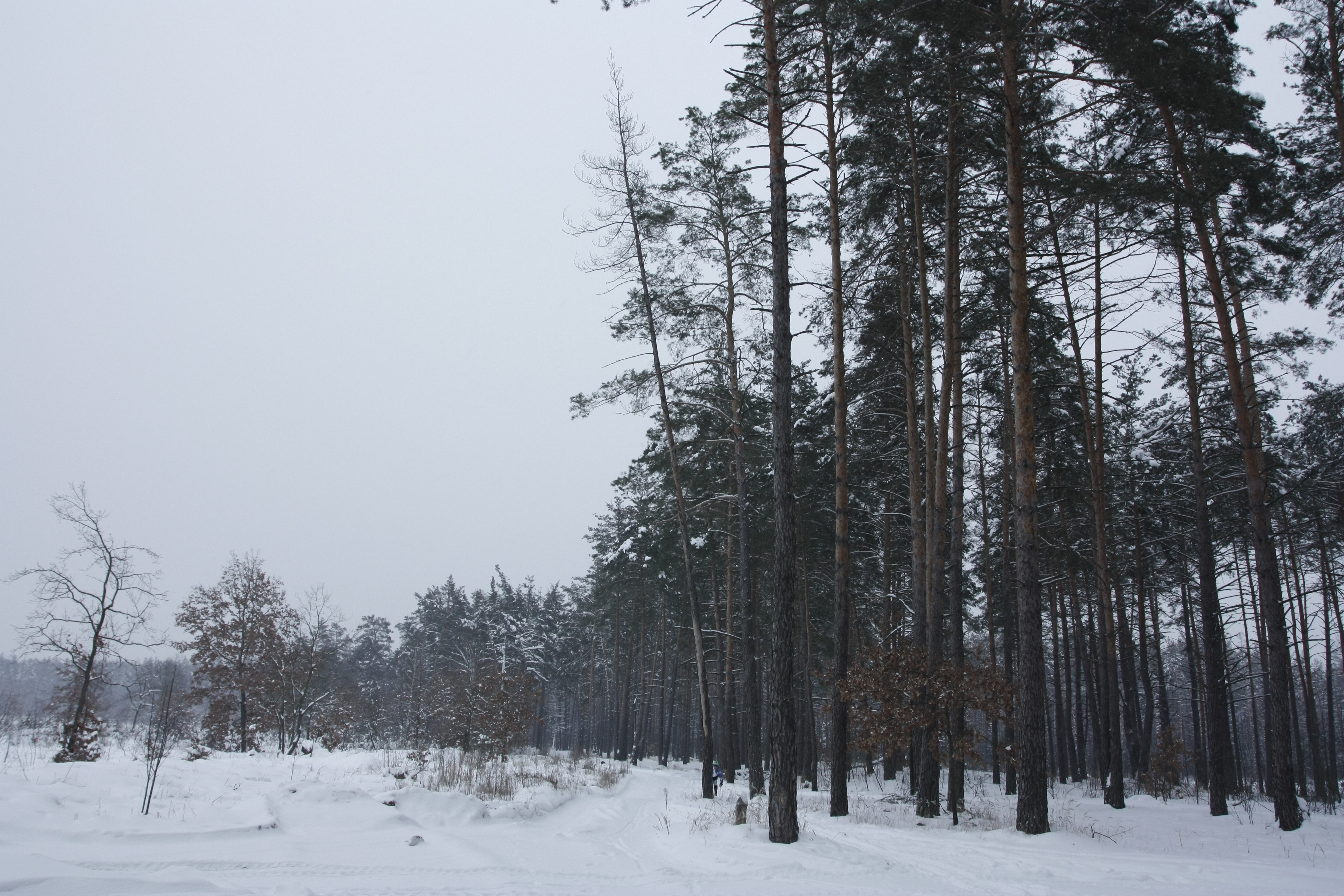 Участок леса, вырубленный в июле 2010 года. Фото: The Epoch Times Украина