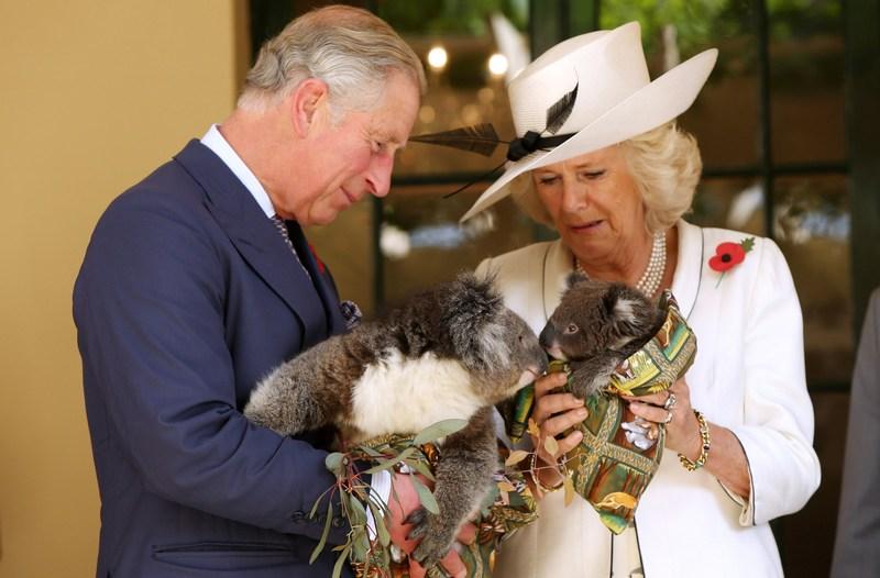 Аделаида, Австралия, 7 ноября. Высокие гости из Англии держат на руках коал. У принца Чарльза коала по имени Као, а у его супруги Камиллы — коала Матильда. Фото: Morne de Klerk/Getty Images