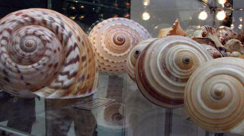 Уникальная коллекция морских раковин. Фото:Юлия Ламаалем/The Epoch Times