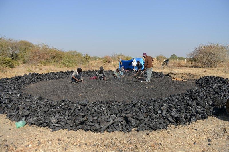 Пригород Ахмедабада, Индия, 19 января. Рабочие заняты изготовлением древесного угля, который пользуется большим спросом по всей стране в качестве топлива. Фото: SAM PANTHAKY/AFP/Getty Images