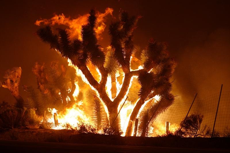 Лейк Хьюс, США, 2 червня. Лісові пожежі в Каліфорнії спалили за ніч рослинність і будівлі на площі 79 кв. км. Фото: David McNew/Getty Images