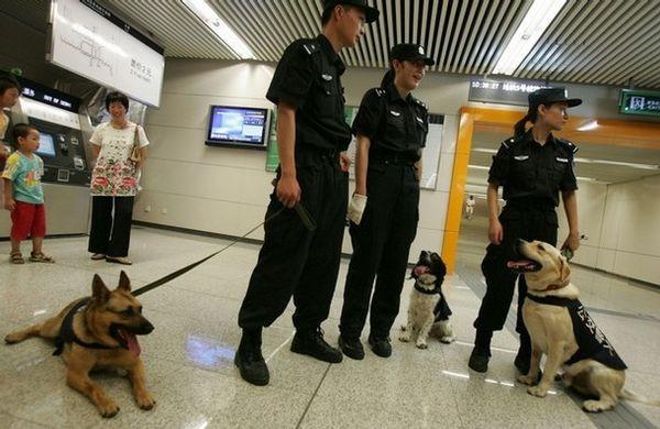 13 июля. Пекин. Полицейские с собаками проверяют вещи пассажиров пекинского метро. Фото: China Photos/Getty Images