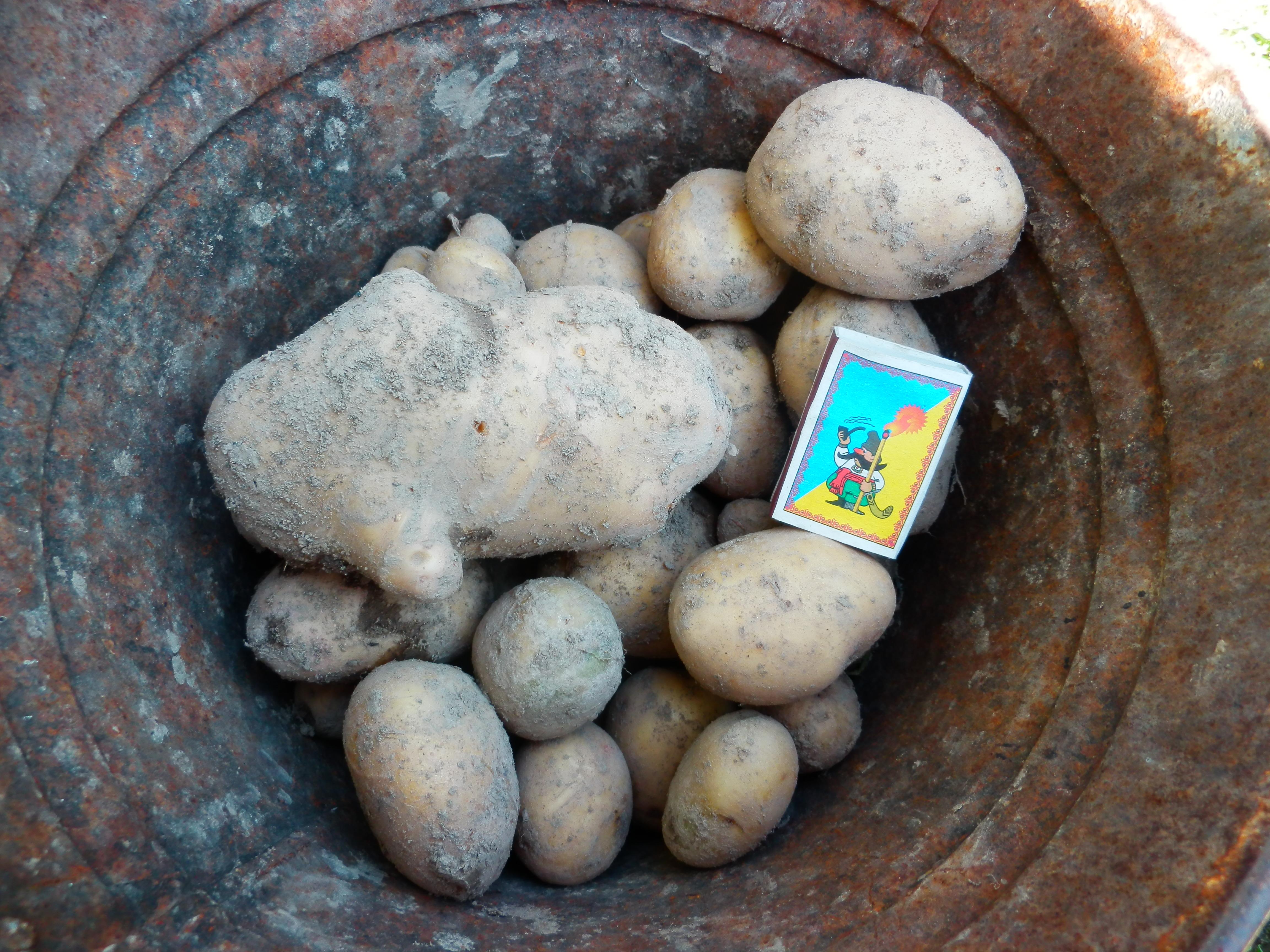 - Картошка не в глине — так ведь же не надо на свет! - А что, кроме чтоб посадить, есть — нажарить? - Да... нет!