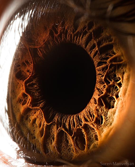 Твои прекрасные глаза. Фото: Сурен Манвелян/surenmanvelyan.com
