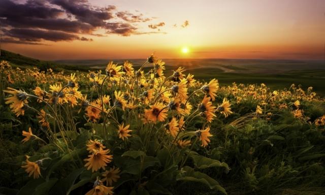 Цветочная поляна на закате Солнца. Регион Палоуз, юго-восток штата Вашингтон. Фото: Tom Rouse/outdoorphotographer.com
