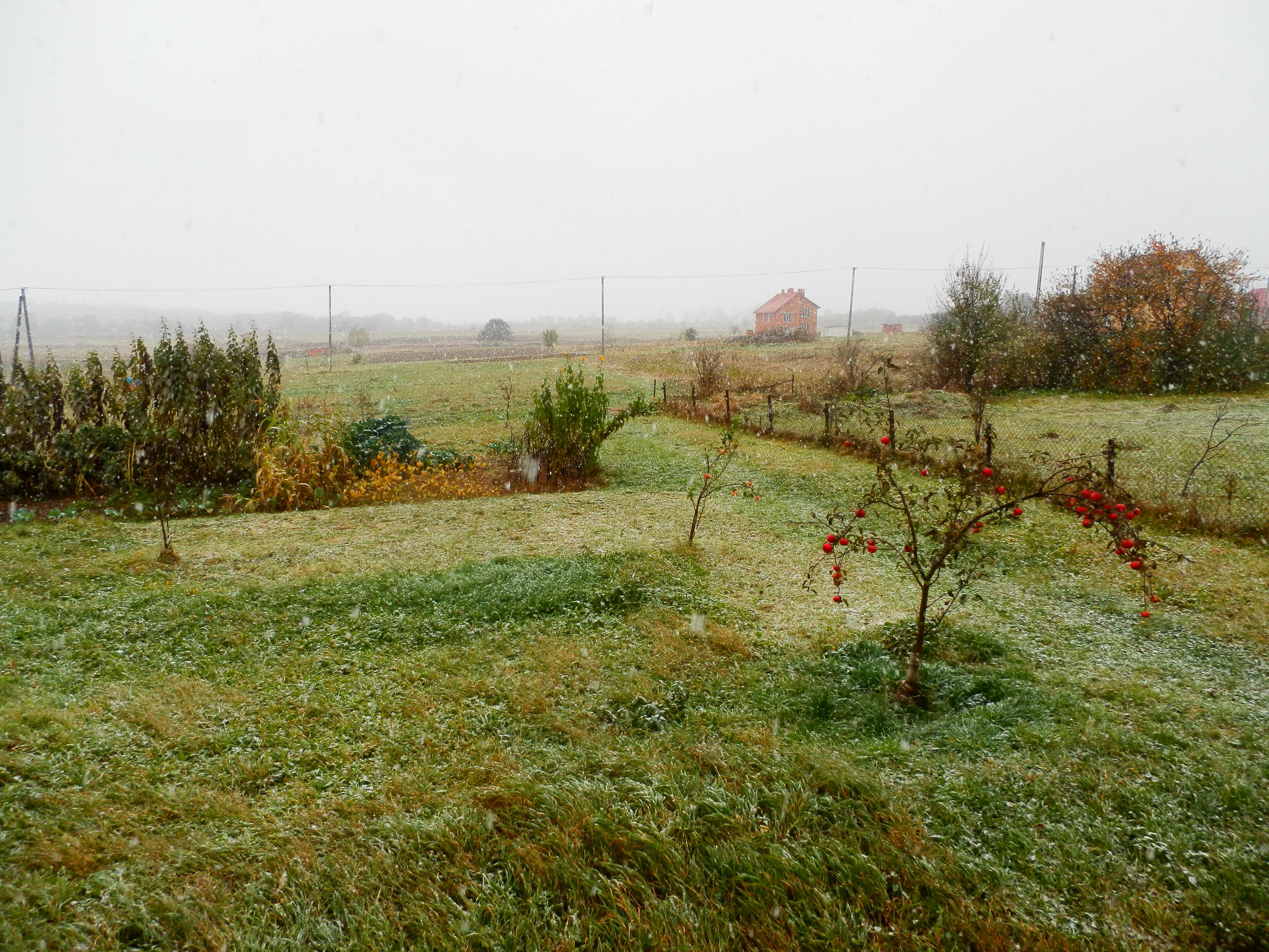 Вот каков он, Первый Снег: «У-у-у!» — ноги промочил — и нету!