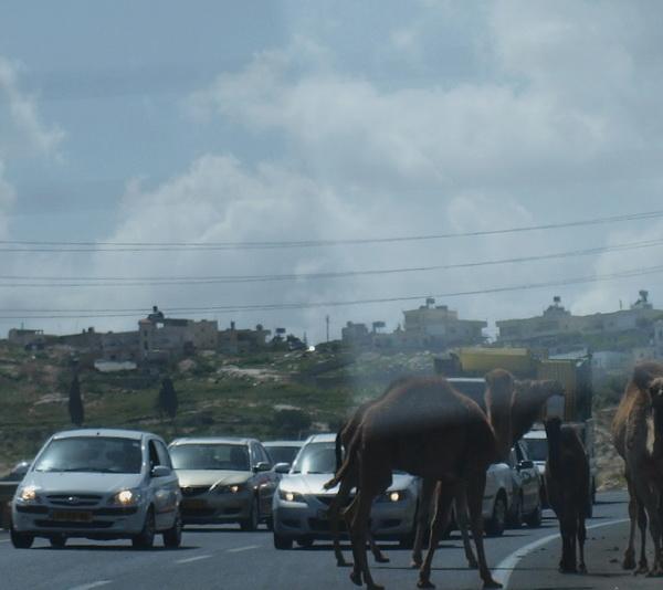 Маале Адум, бедуїни. Фото: Хава Тор / The Epoch Times