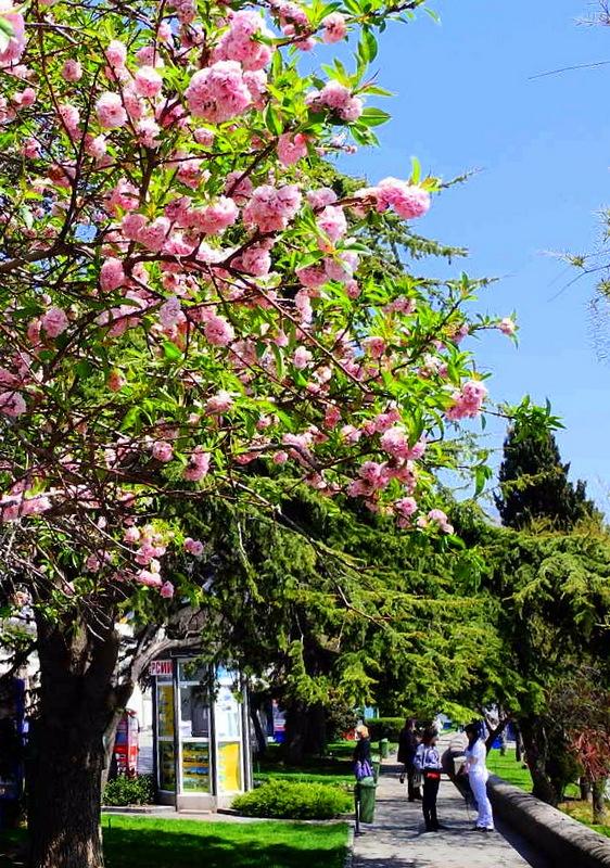 Весняна Ялта. Фото: Алла Лавриненко/Велика Епоха
