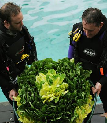 Сіднейський акваріум. Акваріумісти Бен Брюер (L) і Ендрю Барнс (R) готують спеціальний торт із салату для дюгоня Wuru. Фото: GREG WOOD / AFP / Getty Images