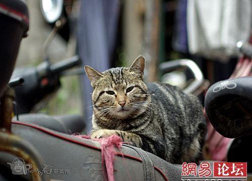 Життя в китайському гуртожитку. Шанхай. Фото з aboluowang.com