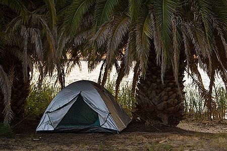 Вот так живописно выглядел лагерь под пальмой. Фото: Сергей Ханцис