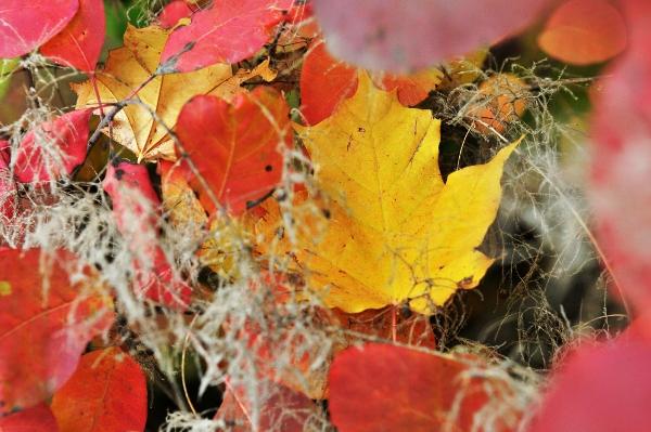 Золота осінь 2010. Фото: The Epoch Times