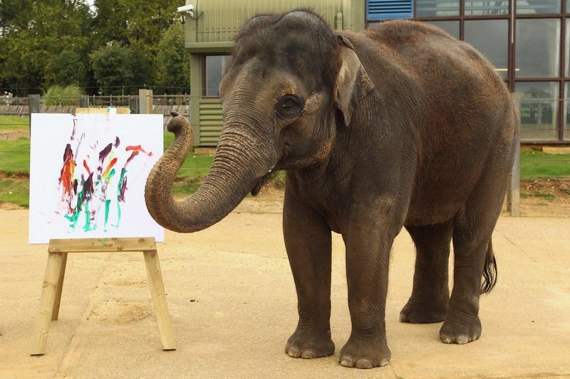 Азиатская слониха Каришма возле своей картины. Фото: Oli Scarff/Getty Images