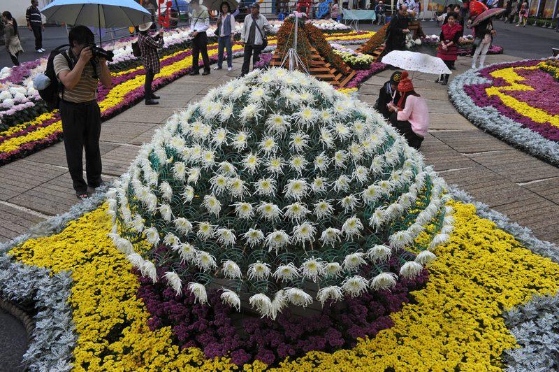 Тайбэй, Тайвань, 21 ноября. В резиденции бывшего лидера страны Чан Кайши открылась выставка хризантем, на которой представлены свыше 30 видов этого цветка. Фото: SAM YEH/AFP/Getty Images