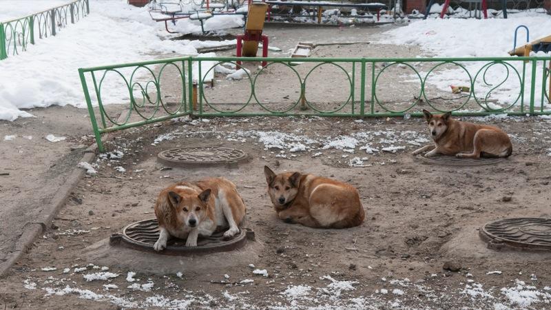 Сильные морозы прогнозируют в первых числах февраля. Столбик термометра опустится до 30 градусов. Фото: Владимир Бородин/The Epoch Times Украина