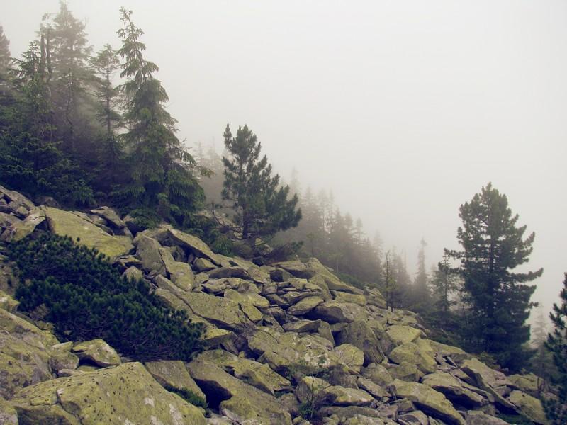 Карпати влітку: пишна зелень та гори у хмарах. Фото: Аліна Варфоломєєва/Велика Епоха