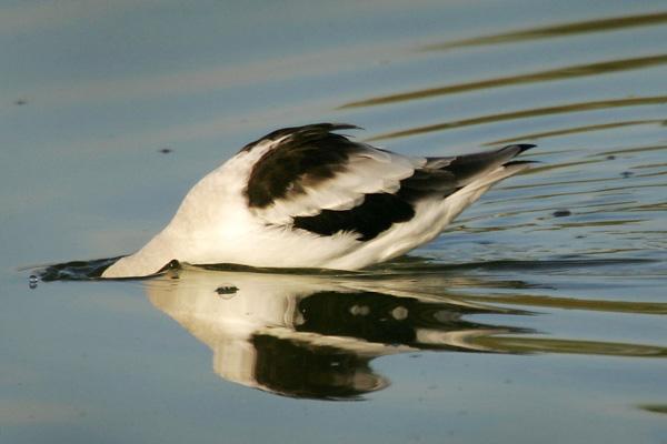 Птицы, которых ранее можно было увидеть на побережье моря Салтон, стали погибать от отравления. Фото: David McNew/Getty Images