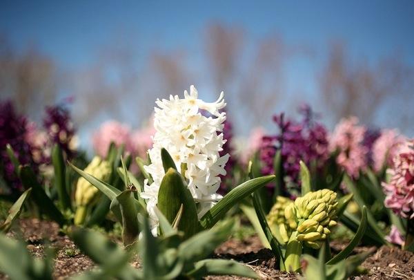 Весеннее цветение. Фото: Getty Images