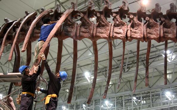 Рабочий монтирует экспонат на Выставки динозавров 2009. Япония, Чибу, 13 июля 2009г. Фото: Junko Kimura/Getty Images