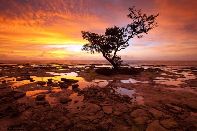 Одинокое дерево, растущее на берегу острова Баия Хонда Ки. Снимок сделан рано утром во время отлива возле г. Биг-Пайн-Ки, штат Флорида. Фото: Patrick Downey/outdoorphotographer.com