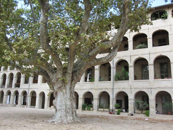 Платан-дерево, Avignon, FRANCE. Фото: Ирина Лаврентьева/Великая Эпоха