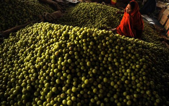 Женщина сортирует индийский крыжовник на фруктовом рынке в городе Аллахабад. Индия. Фото: DIPTENDU DUTTA/AFP/Getty Images