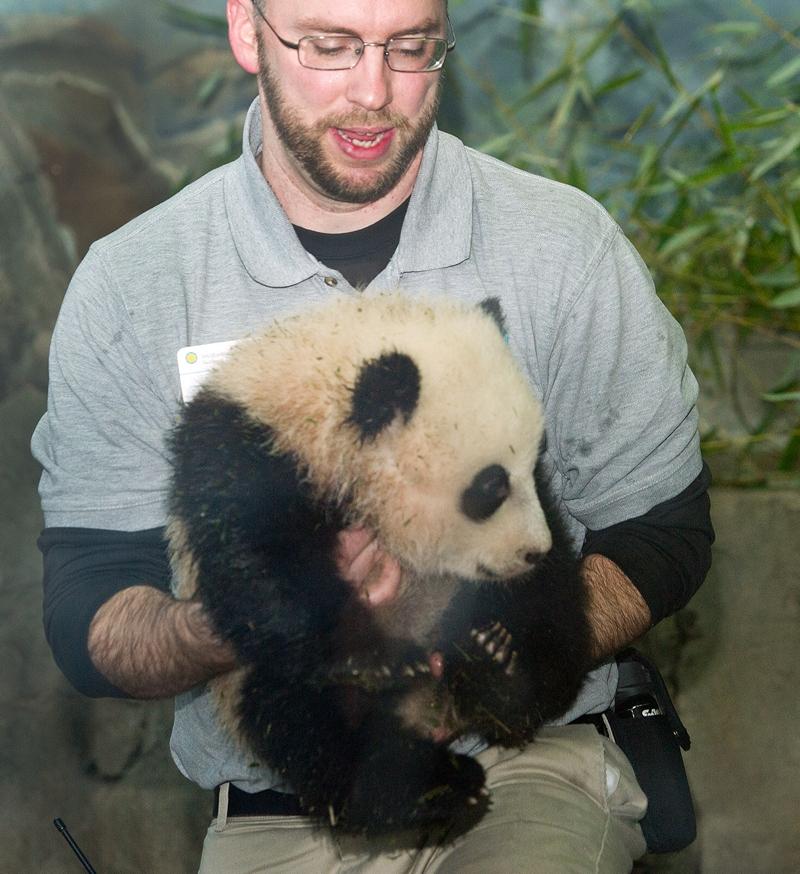 Зоолог Марти Деари несёт панду Бао Бао. Фото: Chip Somodevilla/Getty Images