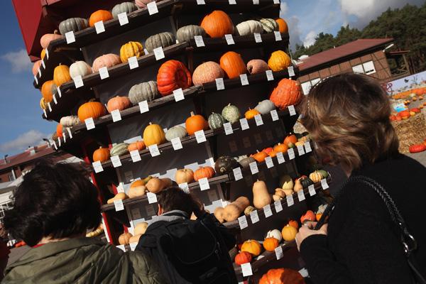 Виставка гарбузів пройшла в Німеччині. Фото: Sean Gallup / Getty Images
