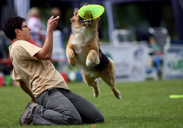 Чрезвычайные собаки. Фото: Miguel Villagran/Getty Images