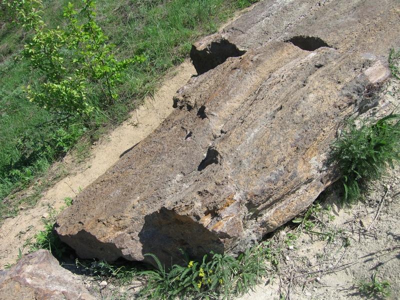 Найбільший стовбур скам'янілого дерева, розташований, в кінці кар'єра з правого його боку. Фото: Мілостнова Росіна/The Epoch Times Україна