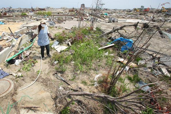 47-річна Міюкі Саїто, яка втратила у катастрофі матір і старшого брата, збирає рослини з залишків саду своїх батьків, м. Наторі, префектура Міягі. Фото: Kiyoshi Ota/Getty Images
