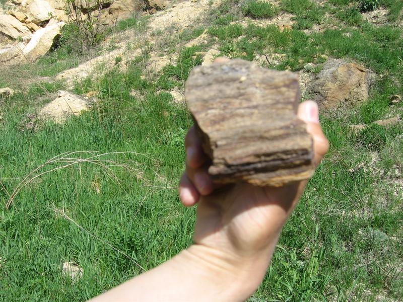 Шматок скам'янілого дерева. Каньйон в Олексієво-Дружківці, Донецької області. Фото: Мілостнова Росіна/The Epoch Times Україна