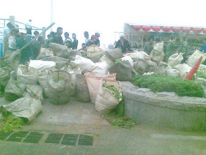 В бухте, в которой пройдёт олимпийская регата, было извлечено более 40 тыс. тонн водорослей. Фото: The Epoch Times