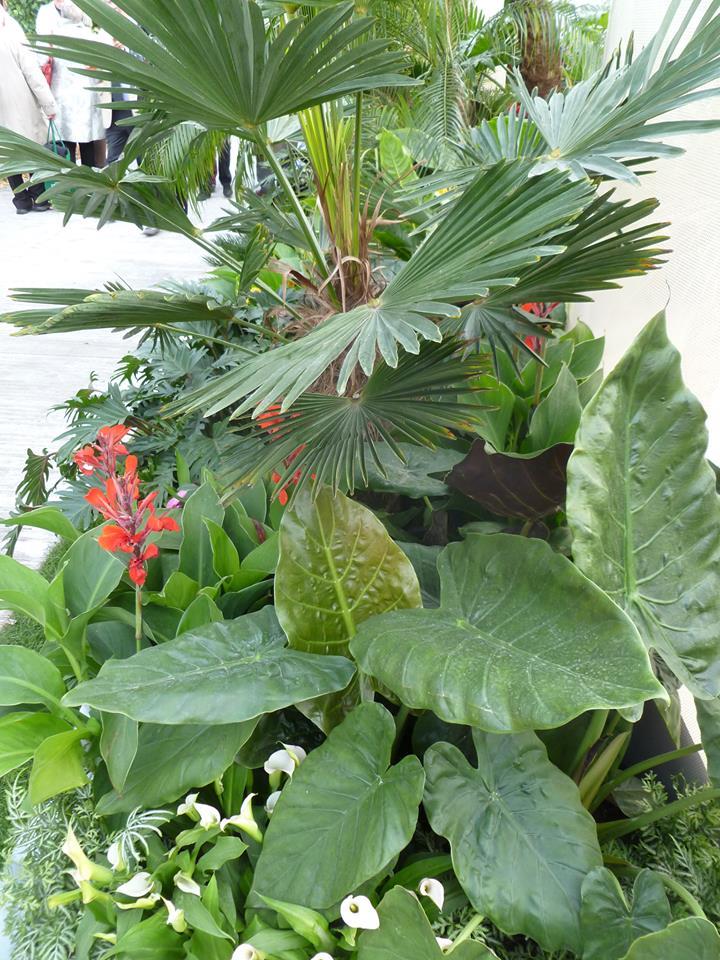 Сад «Соприкосновение» от дизайнера Джека Данкли (позолоченная серебряная медаль) — соединение самых разных растений экваториальной области. Фото: rhschelsea/facebook.com